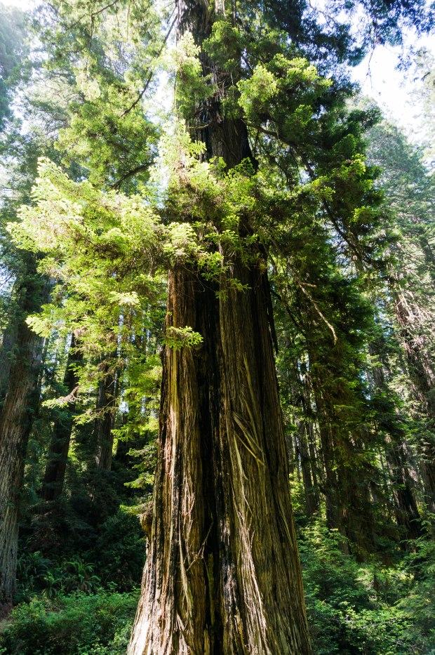 RedwoodHighlights