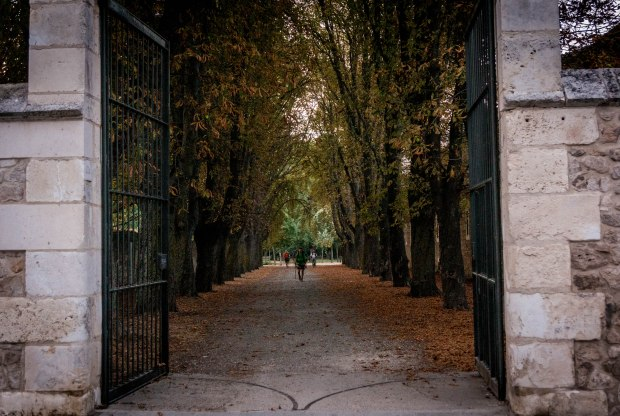 The same morning as the picture before as we exited Burgos we passed through these beautiful trees lining this park gate. As I turned back to take this shot, a few Pilgrims lined up perfectly in the middle of the path. - W
