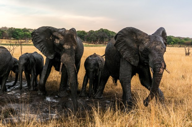 ElephantsinTandem