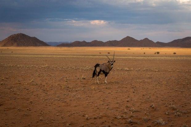 Oryx Namibia Desert