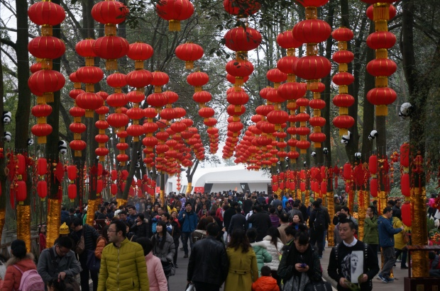 Path to see Giant Pandas