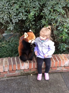 Matilda making friends with a red panda